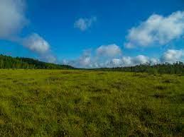 無料画像 : 画像, 草原, 自然の風景, 牧草地, 自然環境, 空, 植生, 緑, 山岳地形, プレーン, 荒野, 雲, 高地, フィールド,  自然保護区, エコリージョン, 土地, 草家, 卵丘, 農村地域, 植物コミュニティ, ツンドラ, サバンナ, 工場, 落ちた, 写真, 国立公園,  低木, 森林 ...