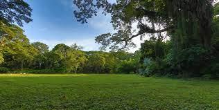 無料画像 : 緑, 庭園, 自然の風景, 植生, 自然環境, 草原, 空, 牧草地, 自然保護区, 土地, 芝生, フィールド, 草家, 植物学,  木質植物, 太陽光, 工場, 森林, 春, 農村地域, プレーン, パーク, 雲, 丘, エステート, 温帯広葉樹と混合林, ジャングル, ファーム  5628x2844 -